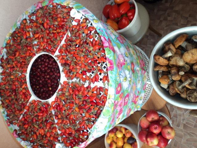 Сушилка овощей и фруктов в домашних условиях
